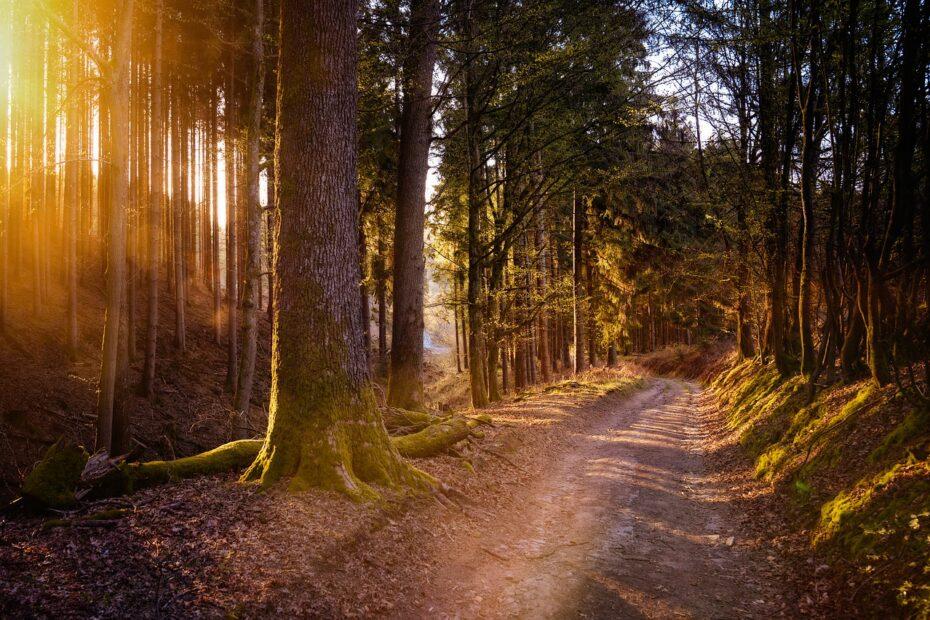 forest, sun, warm-5038025.jpg
